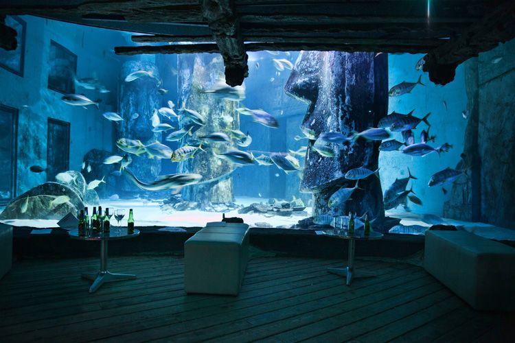 Sea Life London Aquarium Events