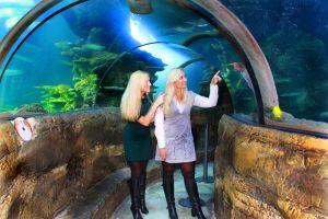 FitzGerald-Photographic_Events-Photography_SEA-LIFE-London-Aquarium-(1).jpg