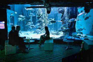 FitzGerald-Photographic_Events-Photography_SEA-LIFE-London-Aquarium-(10).jpg