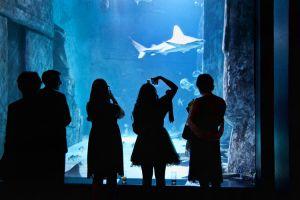 FitzGerald-Photographic_Events-Photography_SEA-LIFE-London-Aquarium-(11).jpg