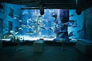 FitzGerald-Photographic_Events-Photography_SEA-LIFE-London-Aquarium-(13).jpg
