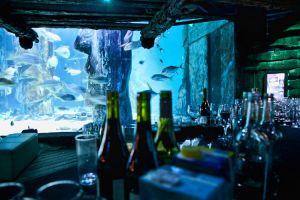 FitzGerald-Photographic_Events-Photography_SEA-LIFE-London-Aquarium-(14).jpg